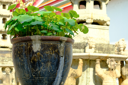 Lotus in the old pot at the Wat Pho temple, Bangkok, Thailand Stock Photo