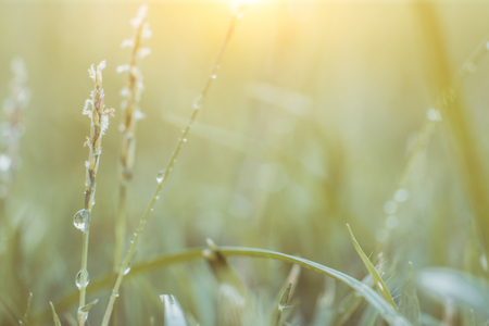 Vintage and macro image on grass flower field.Soft focus and blurred background Stock Photo