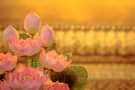 Aeautiful artificial pink lotus with Golden background. Archivio Fotografico
