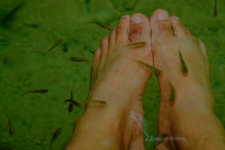 In deep forest and pond with fish spa pedicure wellness skin care treatment also called doctor fish, nibble fish and kangal fish. Stock Photo