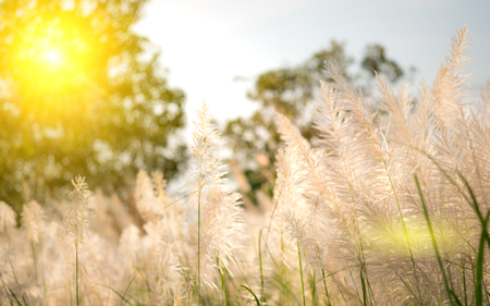 soft focus of flowering grass in wind. dreamy concept. Stock Photo