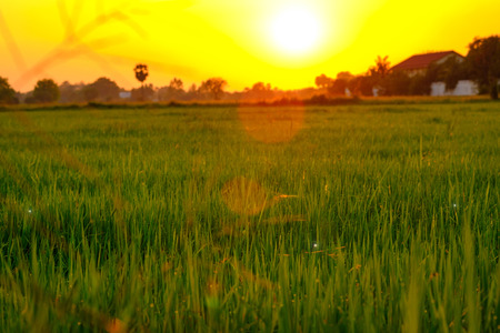 Selective focus on green field with soft sunset lighting. Stock Photo