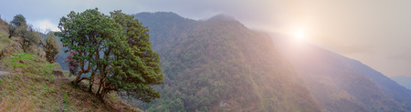 Beautiful himalayan forest landscape with sunlight effect , trek to Annapurna Base Camp in Nepal.