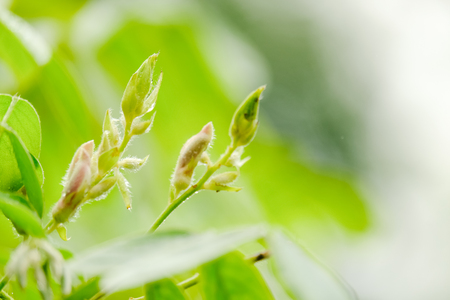 Put forth leave-buds of little leaf, copy space. New life growth ecology business financial concept. 写真素材