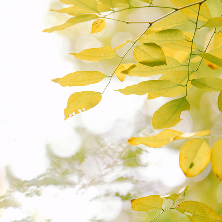 Nature green and yellow leafs in summer with white background.