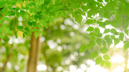 Green leave in garden with sunny for natural spring summer background.