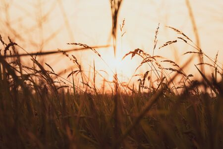 Close up blades of grass in sun rays. Summer macro scene on the field. Fall in the countryside. Rural scenery. Fresh grass on sunset. Abstract nature background. Shining sun. Stockfoto - 128587692