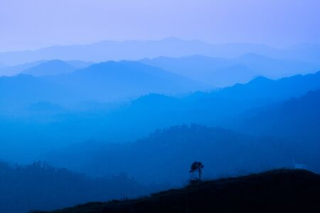 The landscape of foggy autumn forest valley, mystical valley background. Pine trees silhouettes in a morning fog, blue colors.