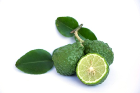 sanguijuela: Bergamota