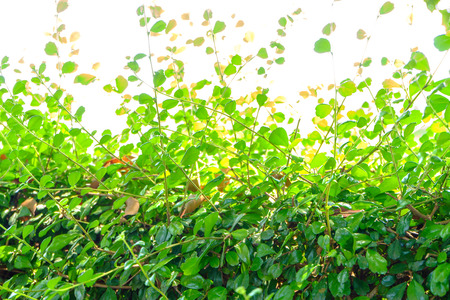 Abstract Small green leaves background photo