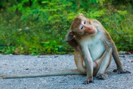 ratchaburi: Monkey Khao Ngoo stone Park Ratchaburi, Thailand.