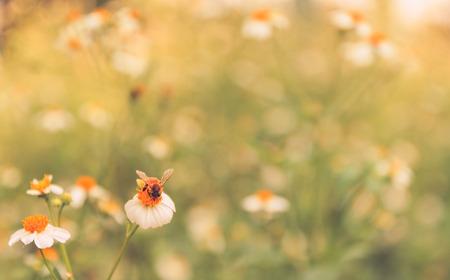 bee on flower: bee on grass flower Stock Photo