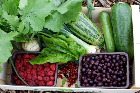 Home grown berries, marrow, courgettes, onions from an allotment