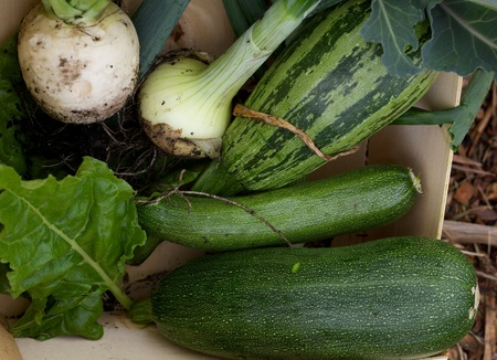 Picked home grown vegetables from an Allotment