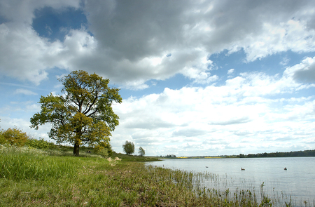 Summer blue sky with an oak tree at the side of a lake in England