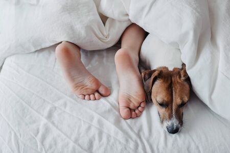 Legs of a child under a white blanket next to a cute dog Jack Russell Terrier. 免版税图像
