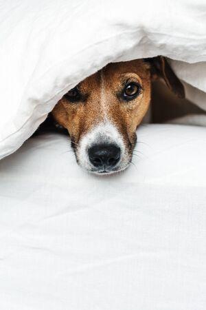 Le chien sur le lit.