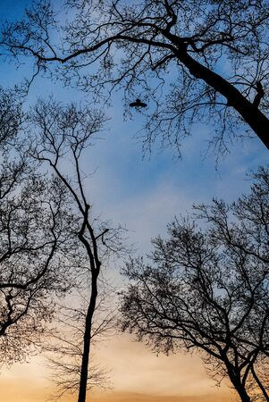 Graphic branches of trees without leaves on the sky background and a flying bird.
