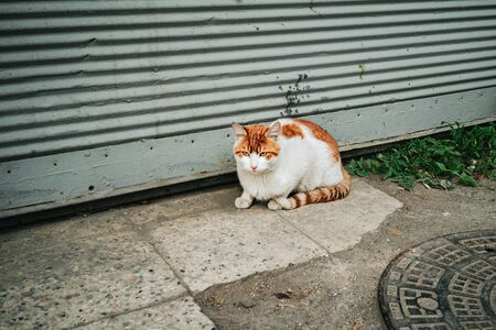 A stray cat on the street. Stock Photo