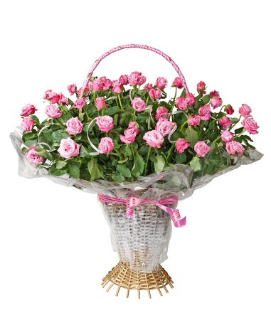 Basket of pink roses isolated over white background