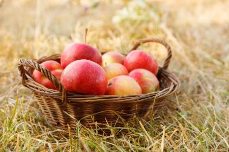 Ripe fresh apples in wicker basket