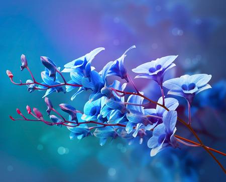 blue flowers: Colorful orchids, flower vibrant concept Stock Photo