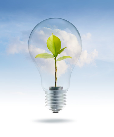 Licht van de bol met geld groene boom binnen op sky blue cloud achtergrond Stockfoto