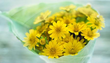 花びら: Abstract flower petals in green and yellow nature