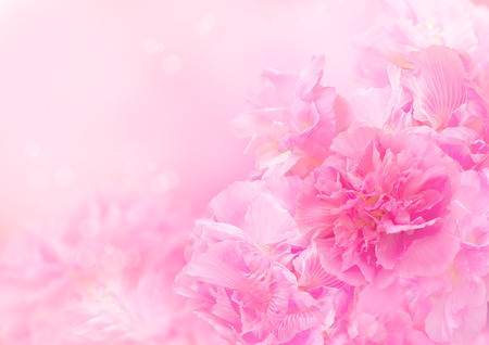 Pink blossom background, Abstract big flower, Beautiful flower Stock Photo