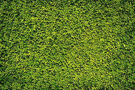 緑の葉の背景の壁 写真素材