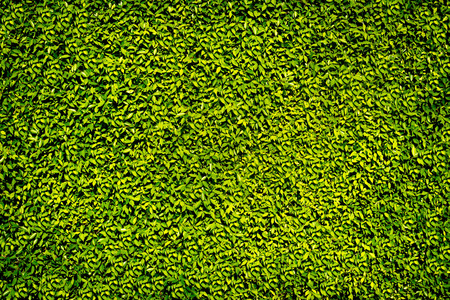Green leaves wall for background Stock Photo