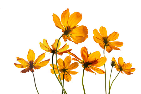 colorful flowers transparent on isolated white background, vibrant concept Standard-Bild
