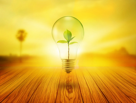 Bulb light with green tree inside on wooden in the sunrise Stock Photo