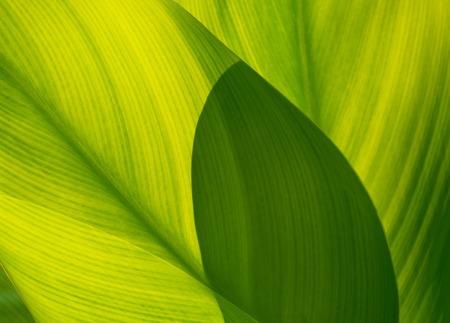 soft   focus: green leaf for background, soft focus