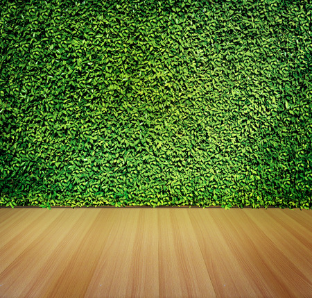 green wall: Green leaves wall and wooden floor for background Stock Photo