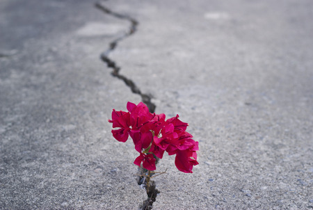 red beautiful flower growing on crack street