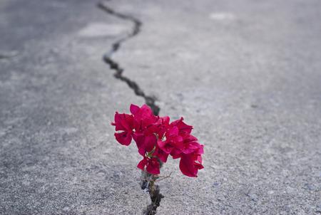 red beautiful flower growing on crack street