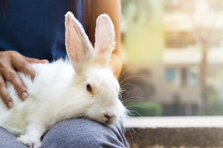 conejo: conejo blanco y la mujer en el parque, enfoque suave, tono de color vibrante Foto de archivo