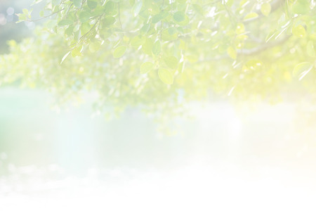 Abstract pastel color soft light morning sunshine on the leaf in lake for background, soft focus Standard-Bild