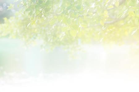 colores pastel: Color pastel Resumen luz suave sol de la mañana en la hoja en el lago para el fondo, enfoque suave