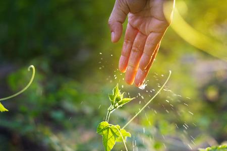 Frauen Hand Bewässerung jungen Pflanzen in der Sonne auf grünem Hintergrund, die Anpflanzung von Landwirtschaft, Soft-Fokus und Unschärfe
