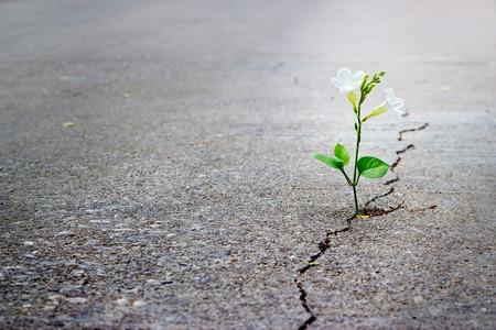 fortaleza: flor blanca que crece en la calle crack, enfoque suave, texto en blanco Foto de archivo