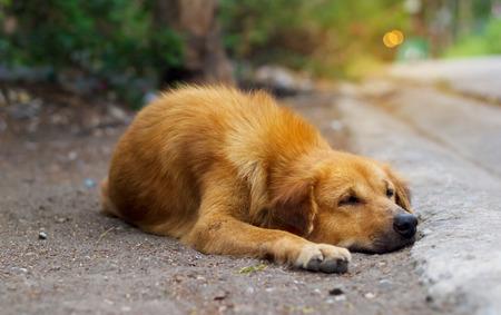 cur: brown stray dog on street, soft focus
