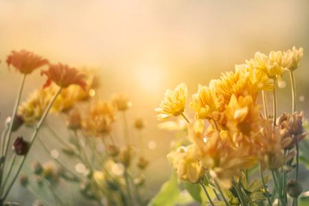 campo de flores: flores de campo al atardecer en el estilo de la vendimia en colores pastel del color de tono, enfoque suave y el concepto de la falta de definición