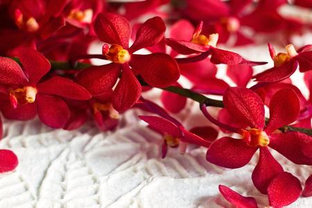 silhouette fleur: rouge fleur d'orchidée sur la texture papre laisse forme fond, soft focus