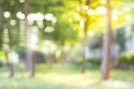 Blurred park, vibrant green natural background
