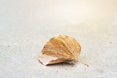 dry stone: Dry leaf on street background, warm color tone and soft focus Stock Photo
