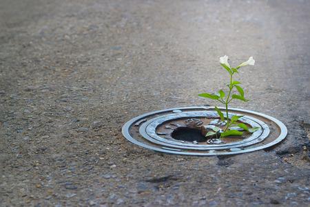 pavement: White flower growing in broken metal pipe on street, soft focus