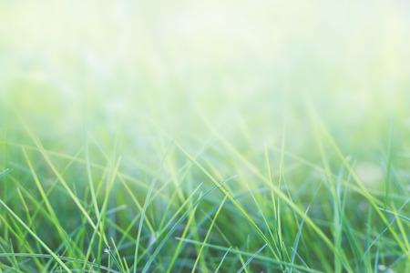 Gras und natürlichen grünen Hintergrund mit selektiven Fokus