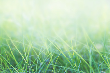grass and sky: grass and natural green background with selective focus